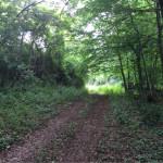 Woodland Track at Domaine de Pessel Holiday Cottages