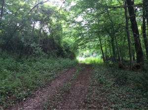 Woodland Track at Domaine de Pessel Holiday Cottages