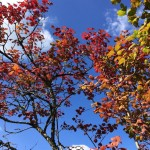 Autumn Colours and Blue Skies at Domaine de Pessel Holiday Cottages