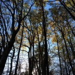 Woodland in winter at Domaine de Pessel Holiday Cottages