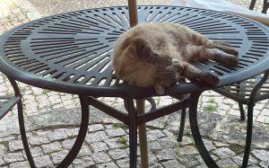 Maky relaxing